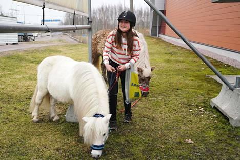 Karoliina Aalto on kulkenut omaperäisellä tavalla kauppaan nyt noin vuoden ajan. Ponit syövät ruohoa marketin pihasta odotellessaan.