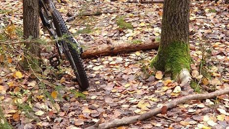 Sticks set on the path.