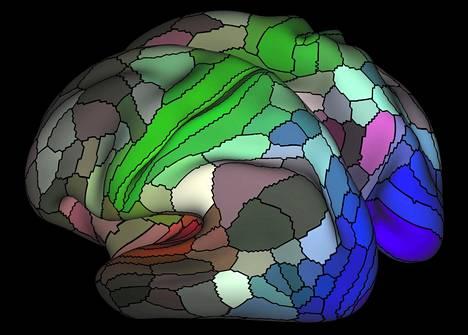 Ihmisen aivokuorelta löytyi uudessa kartoituksessa 180 toisistaan erillistä aivoaluetta kummaltakin aivopuoliskolta. Punaisella näkyvät liittyvät kuuloon, vihreät tuntoon ja siniset näköön.