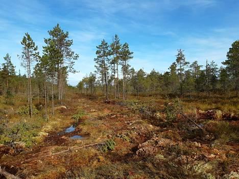 Varsinais-Suomessa Kurjenrahkan kansallispuistossa on ennallistettu yli 30 hehtaaria keidasrämeen laiteita. Hyötyjiä ovat esimerkiksi suolinnut ja perhoset. Kuvassa 1970-luvulla ojitetun suon ojalinja.