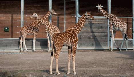 Kööpenhaminan Eläintarha