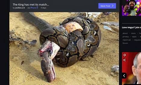 Kuva tuli julkisuuteen, kun sen tuntematon ottaja pyysi apua lajien tunnistamiseen Facebookin matelijoihin keskittyvässä ryhmässä.