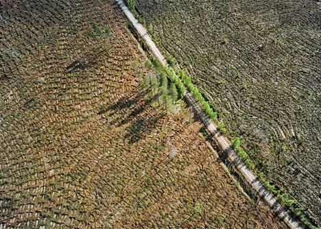 """Metsänhoidollisia toimenpiteitä (Ilomantsi, 2003).""""Ritva Kovalainen ja Sanni Seppo ovat kuvanneet kauan metsiä, puita ja ihmisen ja luonnon suhdetta. Heidän sarjansa Metsänhoidollisia toimenpiteitä kyseenalaistaa talousmetsien käsittelyn menetelmiä."""""""