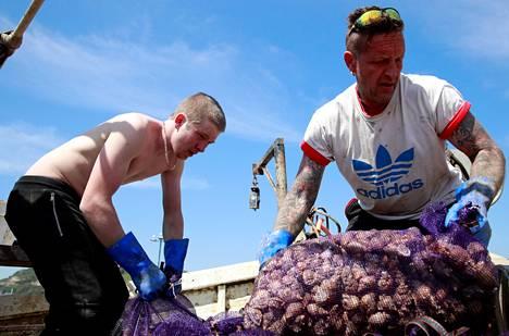 Kalastajat purkavat kotilosaalista Englannin etelärannikolla Hastingsissä huhtikuussa.