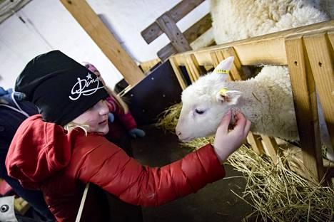 Kahdeksanvuotias Liinu Kainulainen tervehti karitsaa.