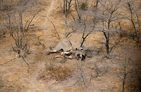 Salametsästäjien uhriksi joutunut norsu Botswanassa syyskuussa 2018.