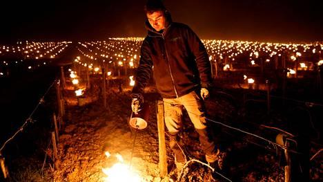 Viininviljelijä sytytti ulkotulia lämmittämään viiniköynnöksiään keskiviikon vastaisena yönä Chablis'n alueella Ranskassa.
