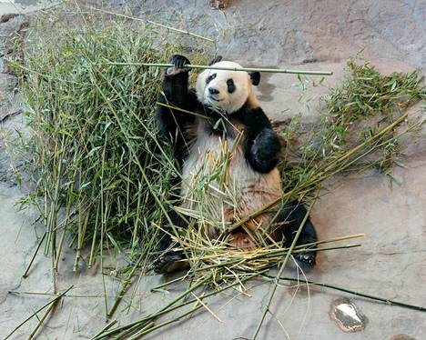 Ähtärin eläinpuiston taloudellinen tilanne oli pandoista huolimatta viime vuonna heikko.