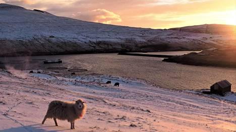 Färsaarilla elää noin 70 000 lammasta. Ihmisiä saarilla on noin 50 000.