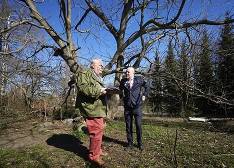 Perikunnan edustaja Kari Niemelä (vas.) ja kiinteistövälittäjä Kimmo Ojanen olisivat halunneet kaataa suojellun mantšurianjalopähkinäpuun Helsingin Pukinmäessä.