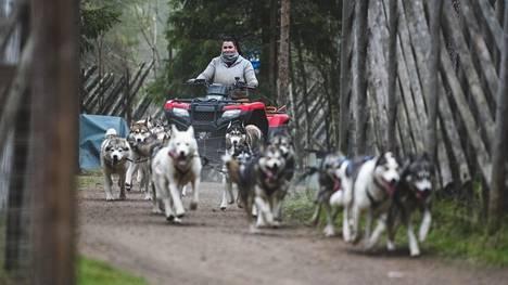 Husky Parkin työntekijä Aliisa Mäkinen ohjaa kuudentoista koiran harjoitusvaljakkoa, joka vetää perässään mönkijää. Koiria harjoitetaan, vaikka ensi talven asiakkaiden määrästä ei ole tietoa.