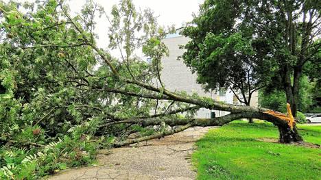 Viimeviikkoinen myrsky kaatoi paljon puita eri puolilla Helsinkiä.