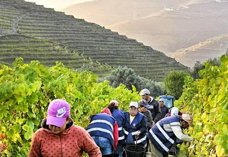 Viininpoimijoita syyskuussa Valladon viinitilalla Peso da Reguan kylässä Portugalissa.