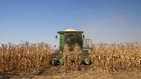 Sadonkorjuukone korjasi valkoista maissia pellolla Grootvleissä Etelä-Afrikassa heinäkuussa 2014.