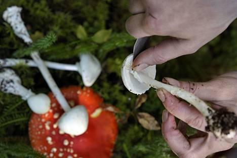 Valkokärpässieni kasvaa yleisenä Etelä- ja Keski-Suomessa ja harvinaistuu pohjoista kohti. Osa herkkusienilajeista muistuttaa sitä ulkoisesti.