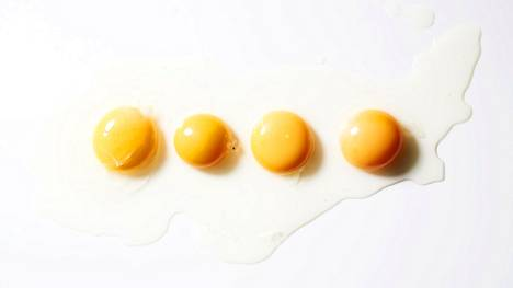 Eri tavalla tuotetut kananmunat raakana. Vasemmalta oikealle lueteltuna: luomukananmuna, ulkokanalan muna, lattiakanalan muna ja virikehäkkikanalan muna.
