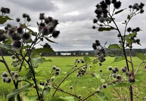 Suomen asutuksen keskipiste osuu Hauholle Hovinkartanon ohrapeltoon