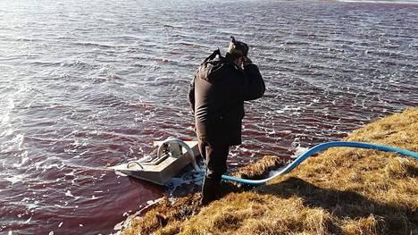 Venäjän meripelastuksen julkaisemassa kuvassa öljyä pumpataan pois Ambarnajajoesta. Kuva: AFP PHOTO / VENÄJÄN MERIPELASTUS
