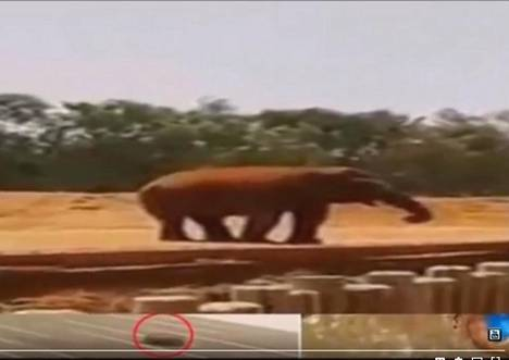 Ohikulkija kuvasi tapahtunutta seuranneen tilanteen ja kuvan heittäneen elefantin videolle. Kuvakaappaus Youtubeen ladatusta videosta.