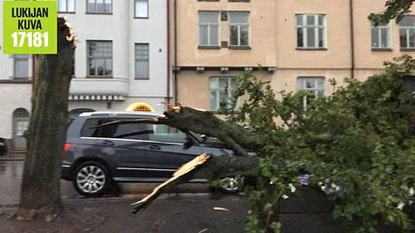 Puu kaatui Hakaniemen rannassa.