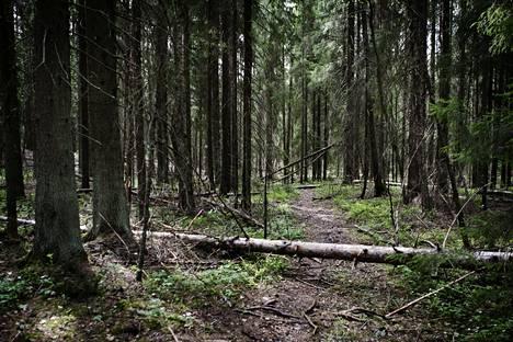 Vantaan Petikon suuri luontovirkistysalue.