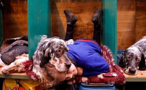 Katie McCloughlin lepäilee yhdessä englanninsetteri Topsyn kanssa koiranäyttelyssä Birminghamissa lauantaina.