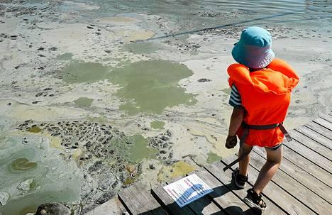Poika heitteli laiturilta kiviä meressä kelluvaan leväliejuun Jurmossa, Saaristomerellä viime kesänä.