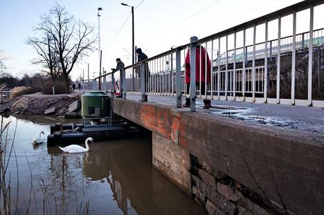 Ohikulkijoita ihailemassa joutsenia tulevan tulvaportin kohdalla.
