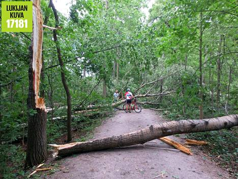 Myrskyn kaatamia puita Talissa.