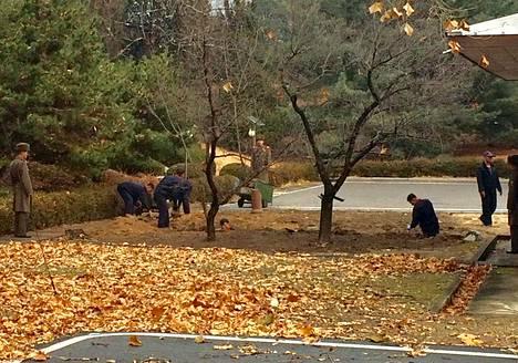 Pohjoiskorealaiset sotilaat istuttavat puita demilitarisoidulla vyöhykkeellä Pohjois- ja Etelä-Korean rajalla.