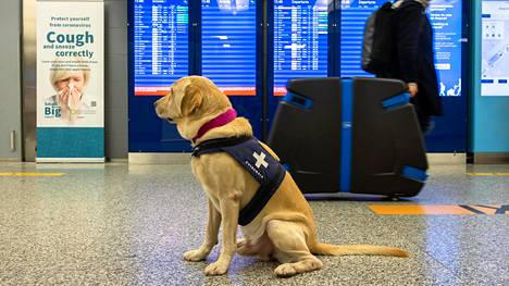 Helsinki-Vantaan lentoasemalla tehtiin viikonloppuna saapuville matkustajille koronavirustestejä kaksinkertainen määrä aiempaan verrattuna.