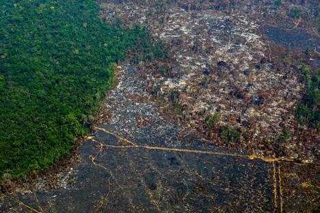 Luonnon monimuotoisuuden eli biodiversiteetin kannalta tärkeää sademetsää tuhotaan esimerkiksi laidunmaan, puun ja palmuöljyn tieltä. Ilmakuva hakatusta Amazonin sademetsästä Brasiliasta vuonna 2019.