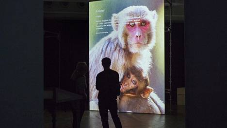 Laura Gustafsson ja Terike Haapoja aloittivat jo vuonna 2012 Toisten historia -projektin, josta myös Epäihmisyyden museo ponnistaa. – Osa installaatiosta.