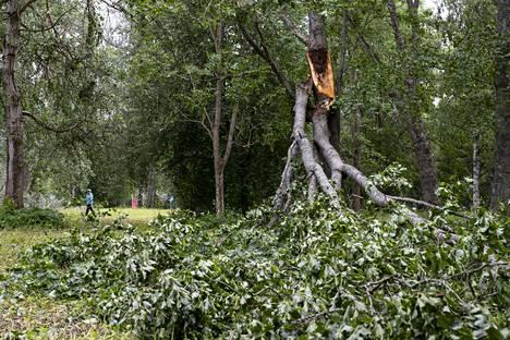 Päivö-myrskyn kaatamia puita Joensuussa keskiviikkona.