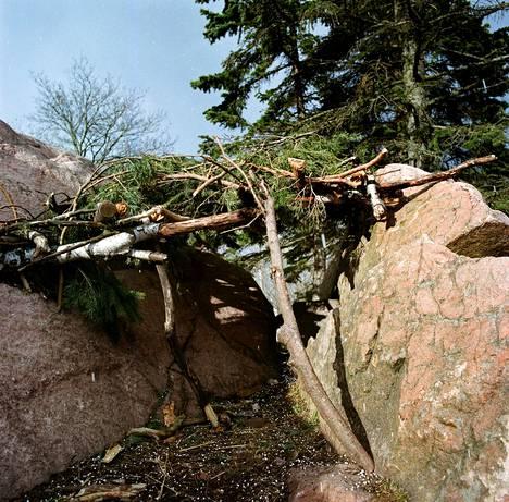 Lauttasaaren Kotkavuorella kivenkolo tarjoaa suojaa.