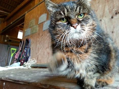 Karskogassa asuva Missan saattaa olla maailman vanhin kissa. Missan täyttää 30 vuotta.