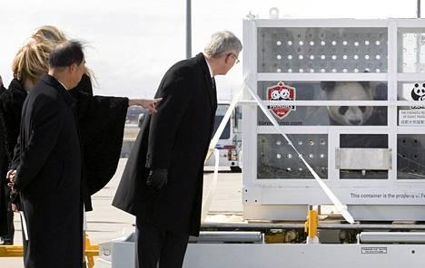 Kanadan pääministeri Stephen Harper (oik.), hänen vaimonsa Laureen ja Kiinan suurlähettiläs Zhang Junsai ihailivat kahta Kanadaan lennätettyä pandaa Toronton lentokentällä maanantaina.