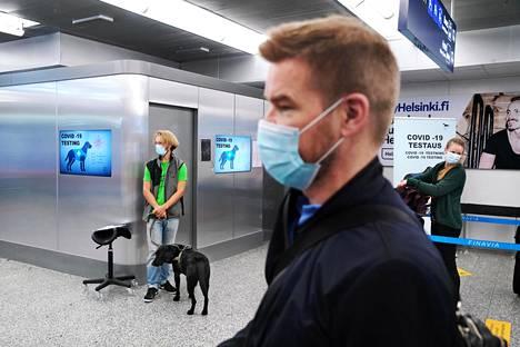 Kari Korkiakoski (etualalla) teetti lokakuussa koronavirustestin hajukoirien avulla Helsinki-Vantaan lentoasemalla. Taustalla koronakoira Miina sekä Nose Academyn työntekijä Egil Björkman. Taustalla oikealla Helena Lemström jonottaa hajukoiratestiin.