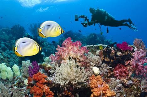 Korallit ovat vaarassa kadota maailman meristä, kun ilmasto lämpenee.