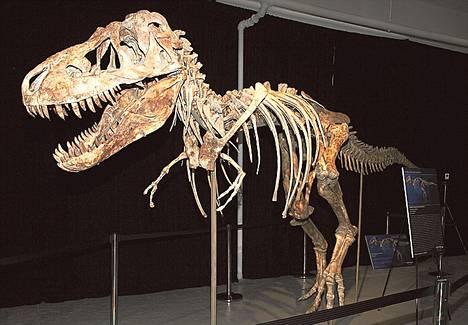 Eläessään tonnin painanut tyrannosaurus on yli seitsemän metriä pitkä ja lähes kolme metriä korkea.<BR/>