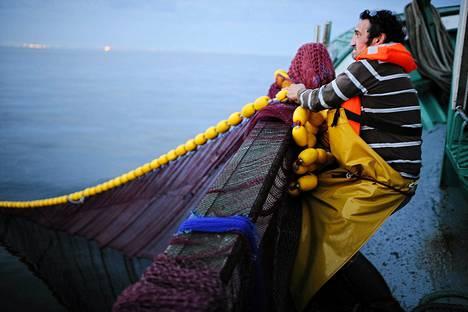 Kalastajat pyytivät sardiineja Quiberonissa Ranskassa. Kalat viedään säilyketehtaalle La Belle Iloiseen.