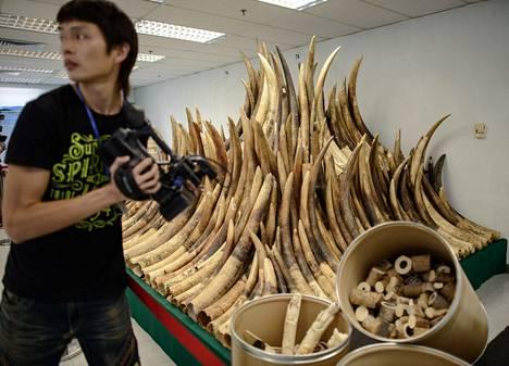 Polttouuniin menevää norsunluuta esiteltiin Hongkongissa torstaina.