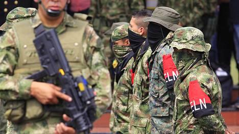 ELN-sissiryhmän jäseniä antautui ja luopui aseistaan vuonna 2013. Kuvassa heitä valvotaan Kolumbian armeijan tukikohdassa.