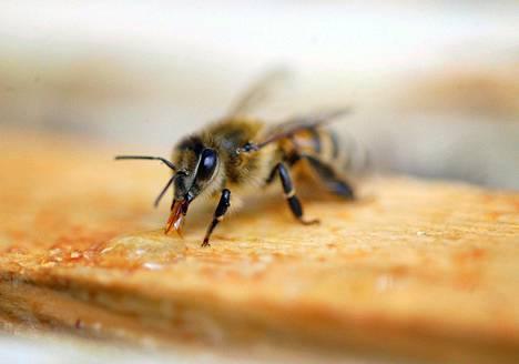 Mehiläisellä ja ihmisellä on pitkä yhteinen historia.