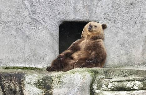 Korkeasaaren eläintarhan karhut heräsivät talviuniltaan tiistaina. Lämpimän talven vuoksi karhut nukkuivat poikkeuksellisesti vain kaksi kuukautta.