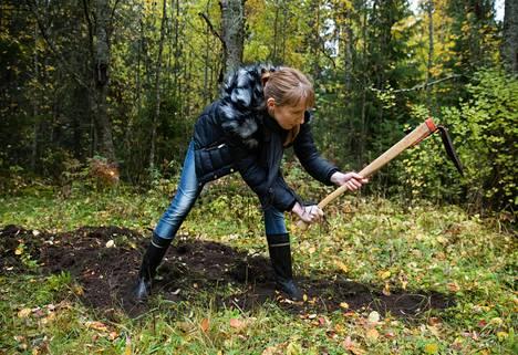 Ennen kuin keksittiin aura, viljelysmaata käännettiin kuokalla. Historioitsija Ulla Koskinen kuokkii sukunsa kesäpaikassa, entisessä Kakkurin torpassa Nokialla.