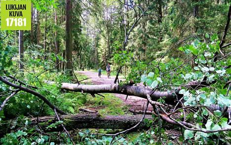 Myrsky oli tehnyt esteitä pyöräilijöille ja kävelijöille Keskuspuistossa.