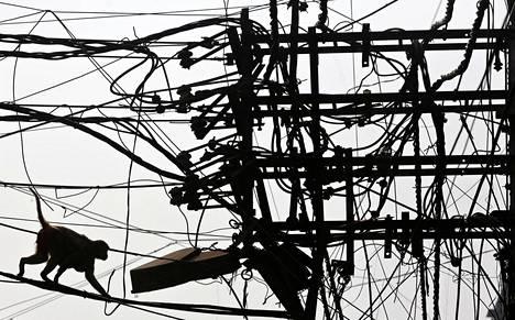 Apina taiteilee sähköjohtoviidakossa Intian Delhissä torstaina.