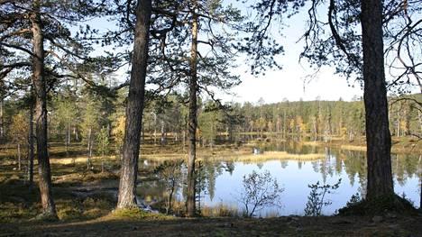 Urho Kekkosen kansallispuiston aluetta Saariselällä.