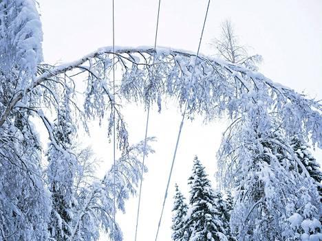 Savon Voiman sähkölinjaa ja lumen taivuttamia puita Karttulassa perjantaina.